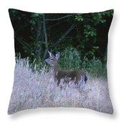 Mule Deer - Sinkyone Wilderness Throw Pillow