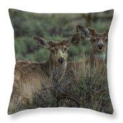 Mule Deer Visitors At Sunset Throw Pillow