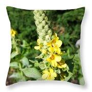 Mullein Wildflower Throw Pillow