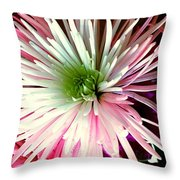 Multi Color Aster Throw Pillow