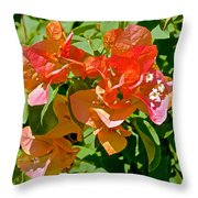Multi-colored Bougainvillea At Pilgrim Place In Claremont-california  Throw Pillow