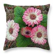 Multicolored Gerberas Throw Pillow