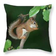 Munching Mulberries Throw Pillow