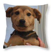 Muppet Maya Throw Pillow
