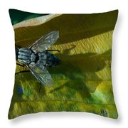 Musca On Display Throw Pillow