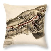 Muscles And Blood Vessels In Arm, 1851 Throw Pillow