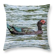 Muscovey Duck Throw Pillow