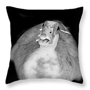 Muscovy Duck Black And White Throw Pillow