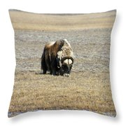 Musk Ox Grazing Throw Pillow