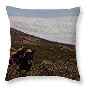 Musk Ox In Front Of Greenlandic Icecap Throw Pillow