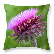 Musk Thistle Blooming Throw Pillow