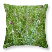 Musk Thistle In Full Glory Throw Pillow