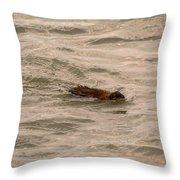 Muskrat In Lake Throw Pillow