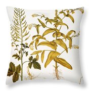Mustard Plant, 1613 Throw Pillow