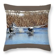 Mute Swan Chasing Canada Goose Throw Pillow