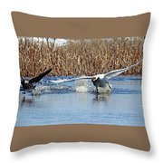 Mute Swan Chasing Canada Goose I Throw Pillow