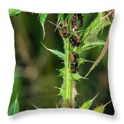 Mutualism - Ants And Treehoppers Throw Pillow