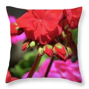 My Beautiful Geraniums And Buds - Images From The Garden Throw Pillow