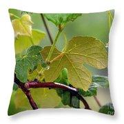 My Grapvine Throw Pillow