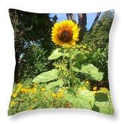 My Own Sun In My Backyard  Throw Pillow