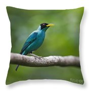 My Song To You.. Throw Pillow