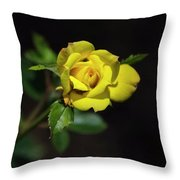 Mystic Yellow Rose Throw Pillow