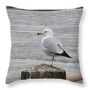 N Y C Water Gull Throw Pillow
