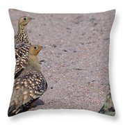 Namaqua Sandgrouse Throw Pillow