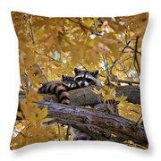 Napping Bandits Throw Pillow