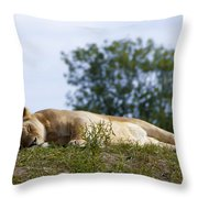 Nappy Time Throw Pillow