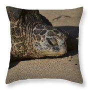 Naptime Closeup Throw Pillow