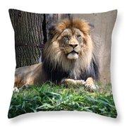 National Zoo - Luke - African Lion Throw Pillow