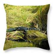 Native Evergladien Throw Pillow