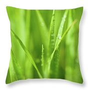 Native Prairie Grasses Throw Pillow