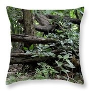 Natural Wood Fence Throw Pillow
