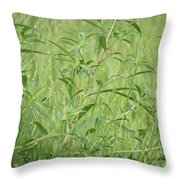 Natural Green Screen Throw Pillow