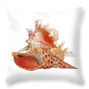 Natural Shell Collection On White Throw Pillow
