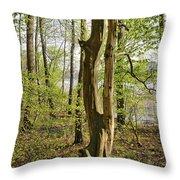Nature, Bare Tree. Throw Pillow