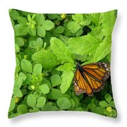Nature In The Wild - Beautiful Solitude Throw Pillow