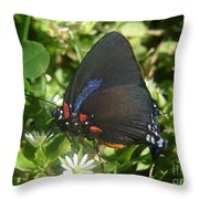 Nature In The Wild - Black Beauty Throw Pillow