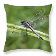 Nature Macro - Blue Dragonfly Throw Pillow