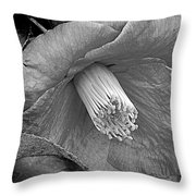 Nature's Beauty In Black And White Throw Pillow