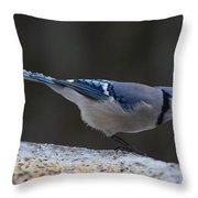 Natures Birds 65 Throw Pillow