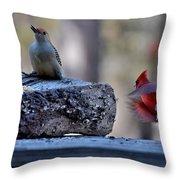 Natures Birds 68 Throw Pillow