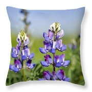 Natures Candy Throw Pillow