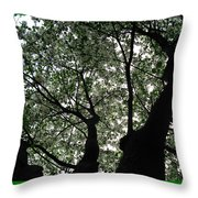 Nature's Cathedral 2 Throw Pillow
