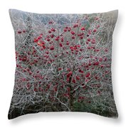 Nature's Decorations Throw Pillow