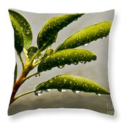 Early Morning Raindrops Throw Pillow