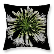 Natures Fireworks - Lily Of The Nile 005 Throw Pillow