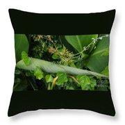 Nature's Gift Wrap Throw Pillow
